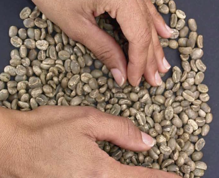 Coffee Beans Getting Ready for Roasting Video