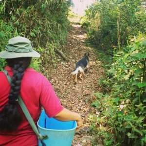Bolivia Coffee Farm