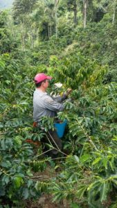 Colombia Tolima farm Latin America coffee