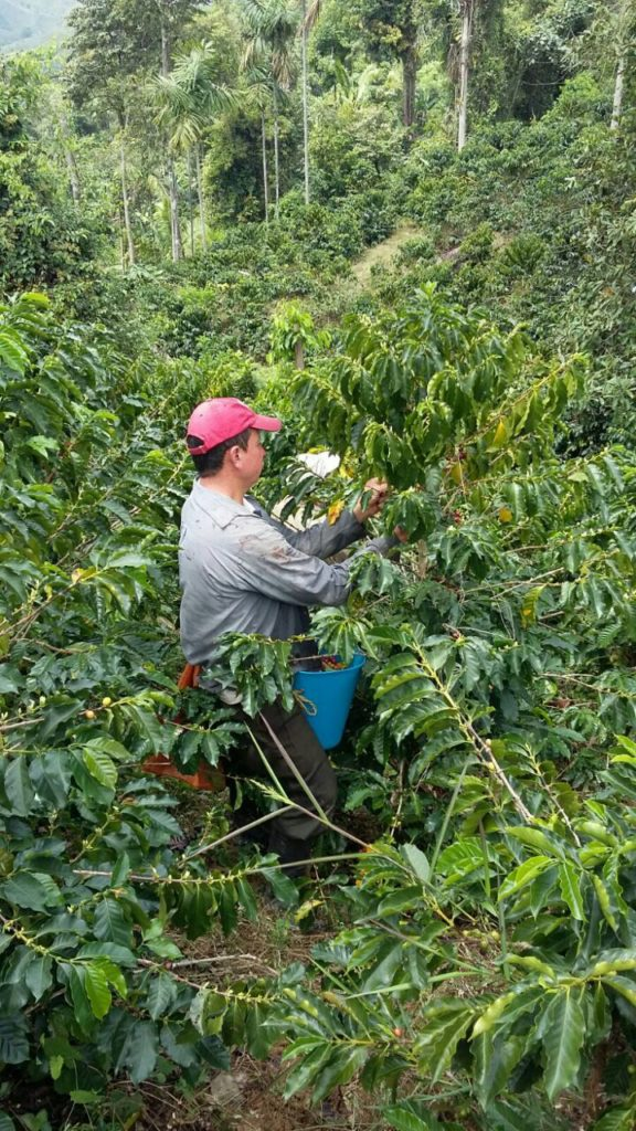 Colombia coffee farm Latin America coffee