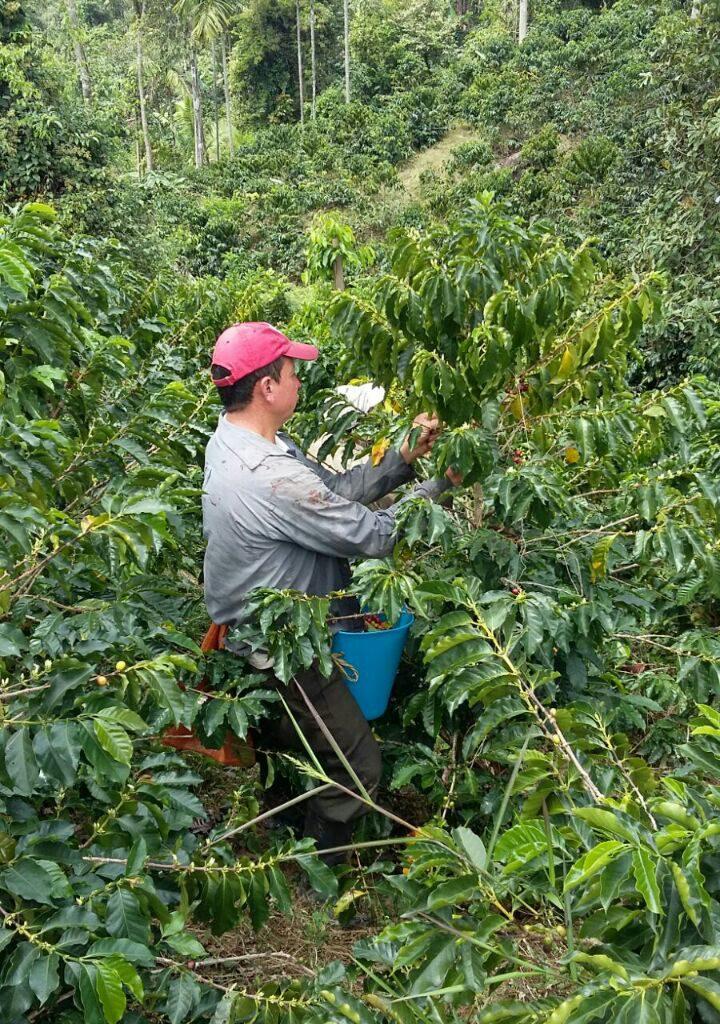 cafe caova farm