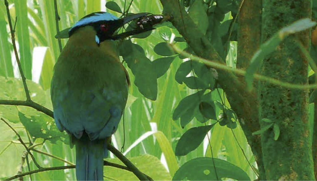 Colombia coffee farm bird