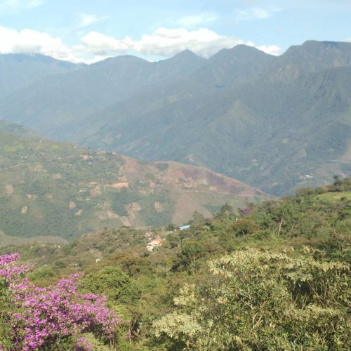 Bolivia Coffee Farm in Coroico