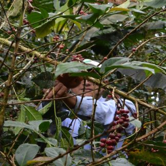 quellouno coffee farm cocotu