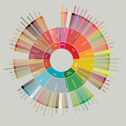 Coffee taster flavor wheel according to SCAA