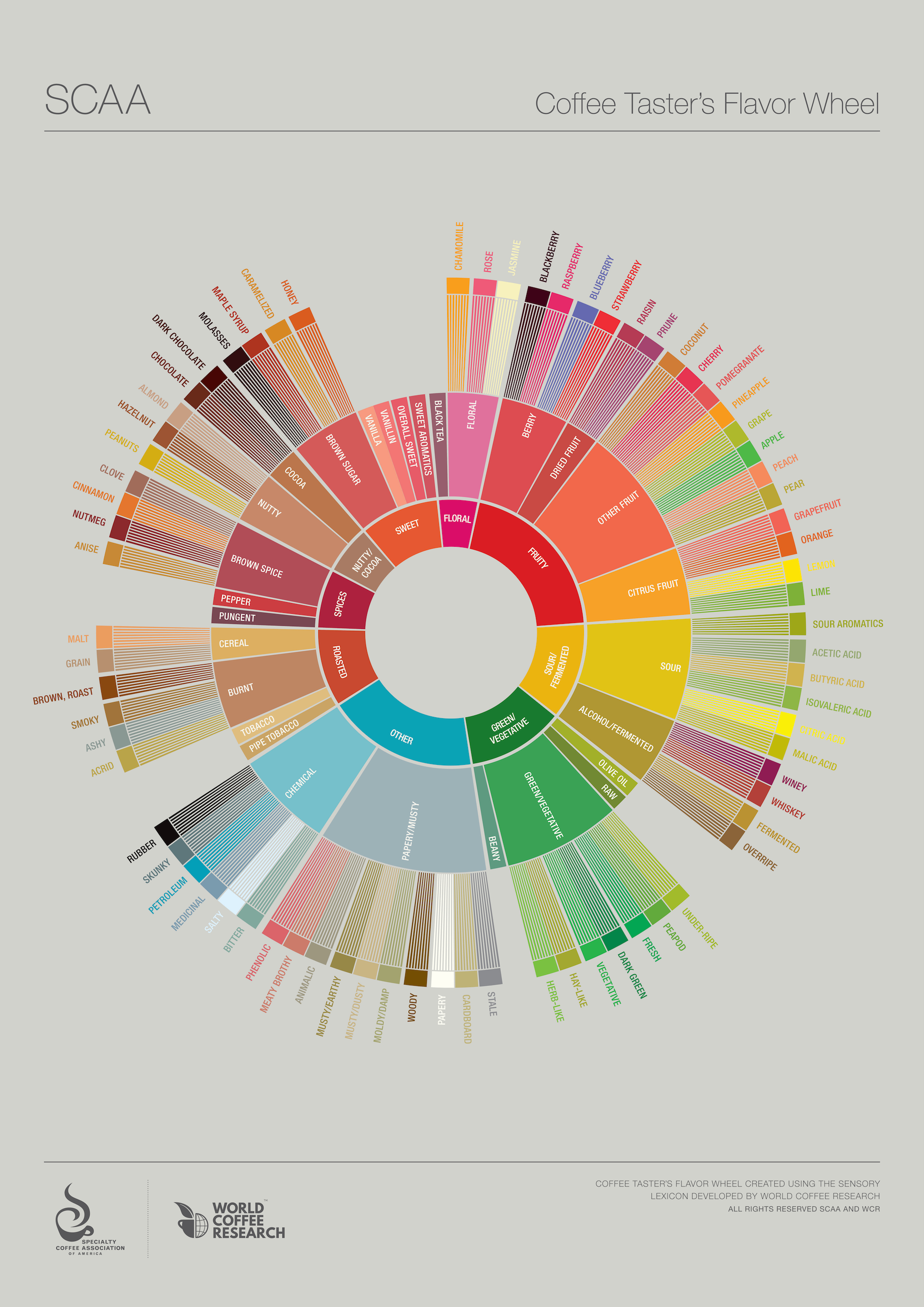Coffee taster's flavor wheel by SCAA