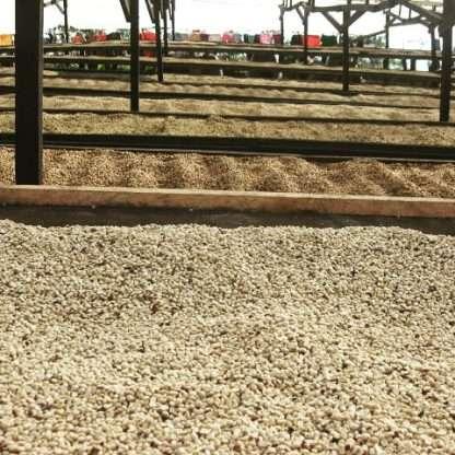 Panama honey processed coffee