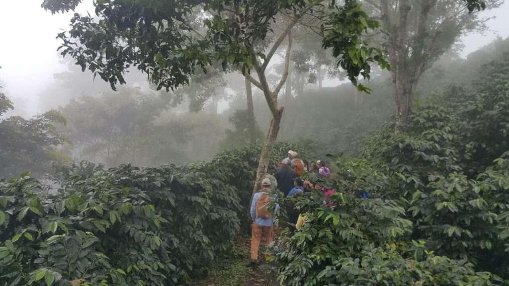 Cocotu Panama Latin America coffee