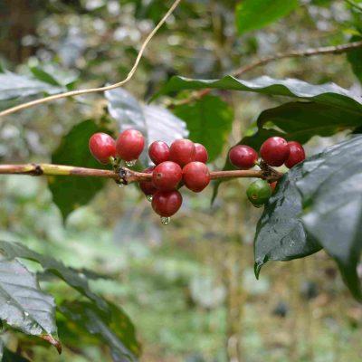Peru Espresso Coffee Blend
