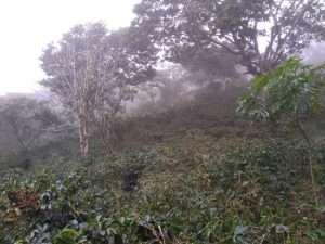 cocotu honduras coffee farm