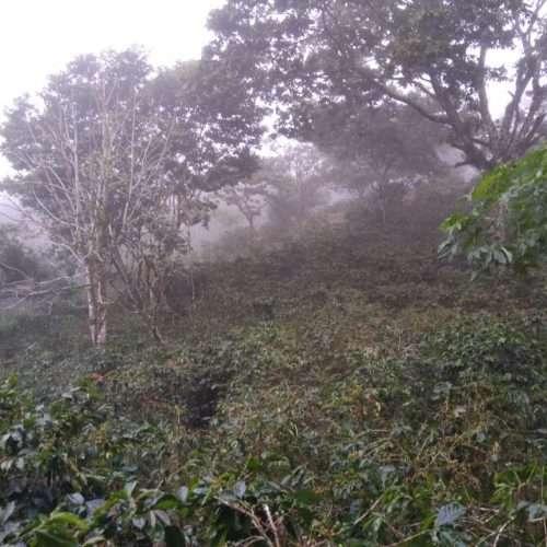 Honduras coffee from Finca La Perseverancia