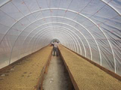 cocotu_farm_honduras