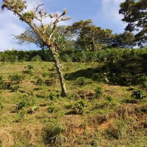 Honduras Coffee Farm Finca La Perseverancia