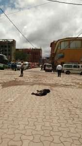 Lake titicaca street dog sleeping