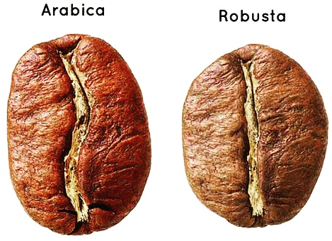 arabica robusta coffee beans