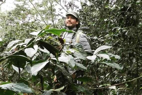 Quillabamba coffee region in Peru pictures