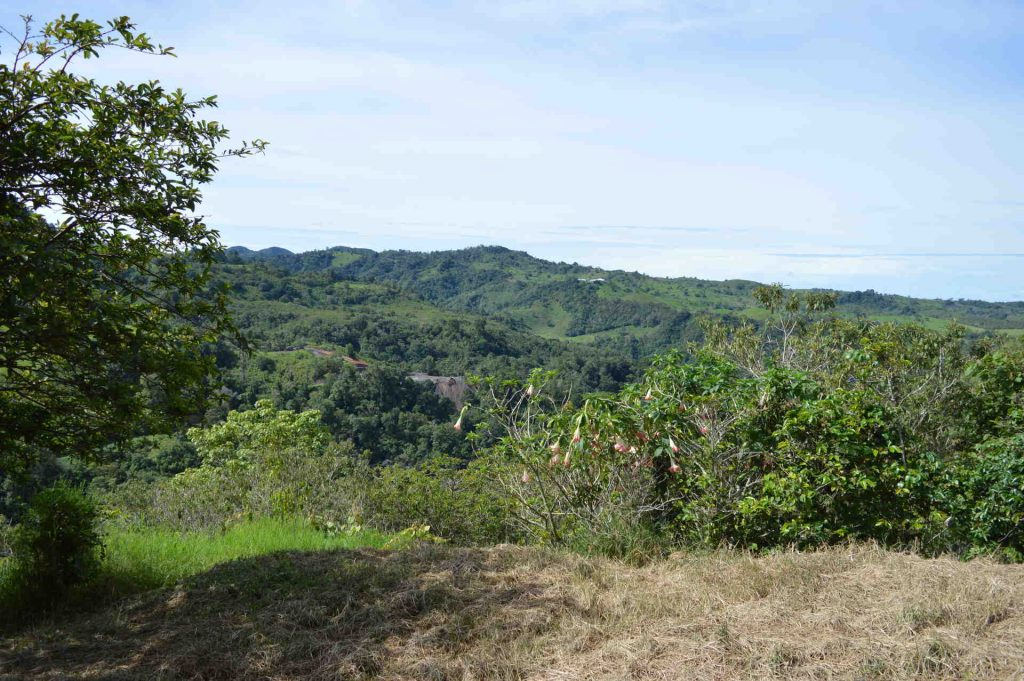 View coffee farm in Chiriqui