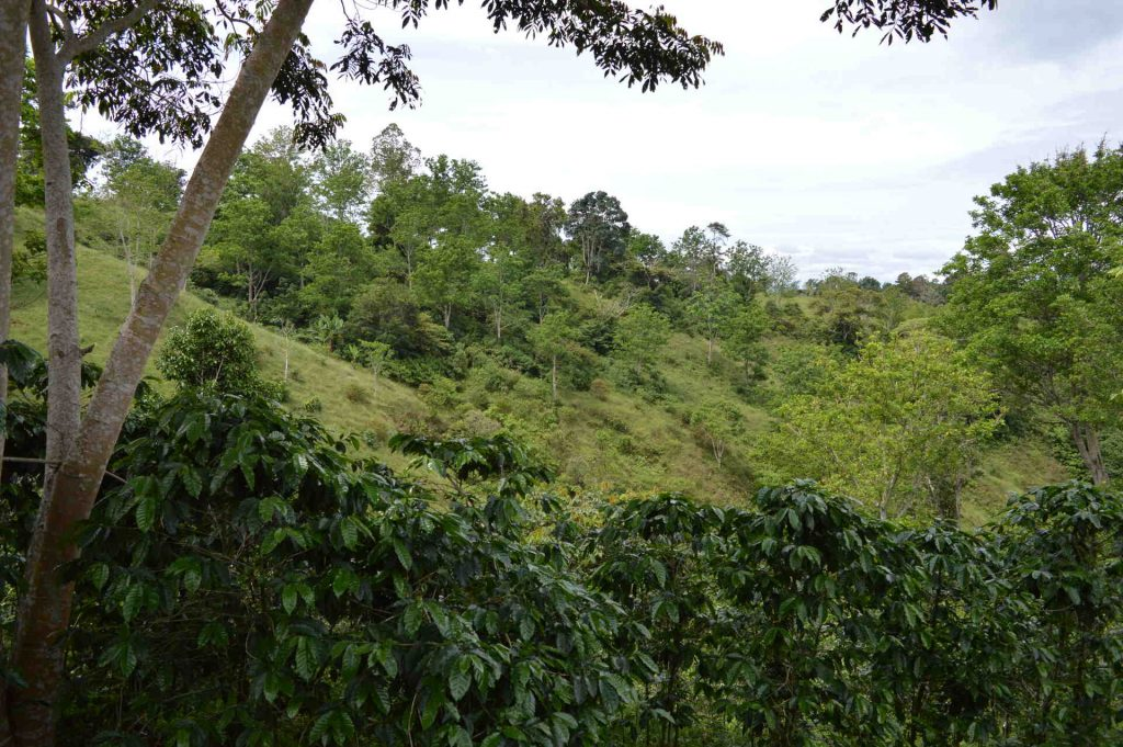 Coffee farm Don Vicente Chiriqui Panama
